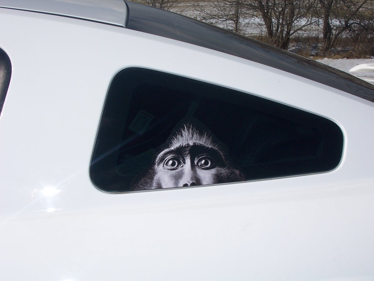 At Superb Graphics We Specialize In Custom DecalsGraphics And - Custom car window decals metal